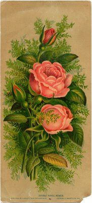 Antique Pink Roses | by Cathe Holden JustSomethingIMade.com