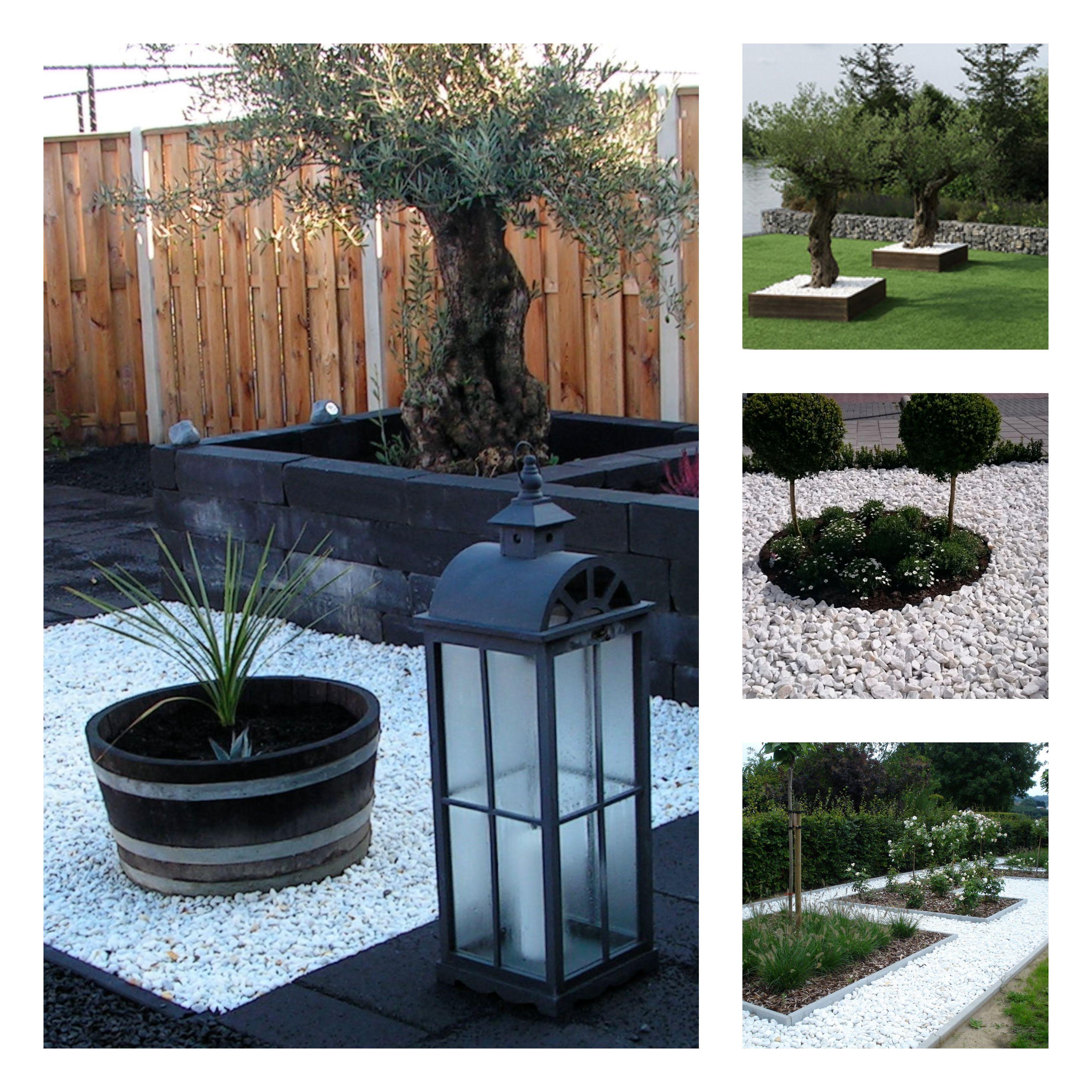 Quieres Darle Un Aspecto Moderno A Tu Jardin Las Piedras Blancas Le Aportaran Esa Luz Que Necesita Piedras Decorativas Para Jardin Diseno De Jardin Macetas