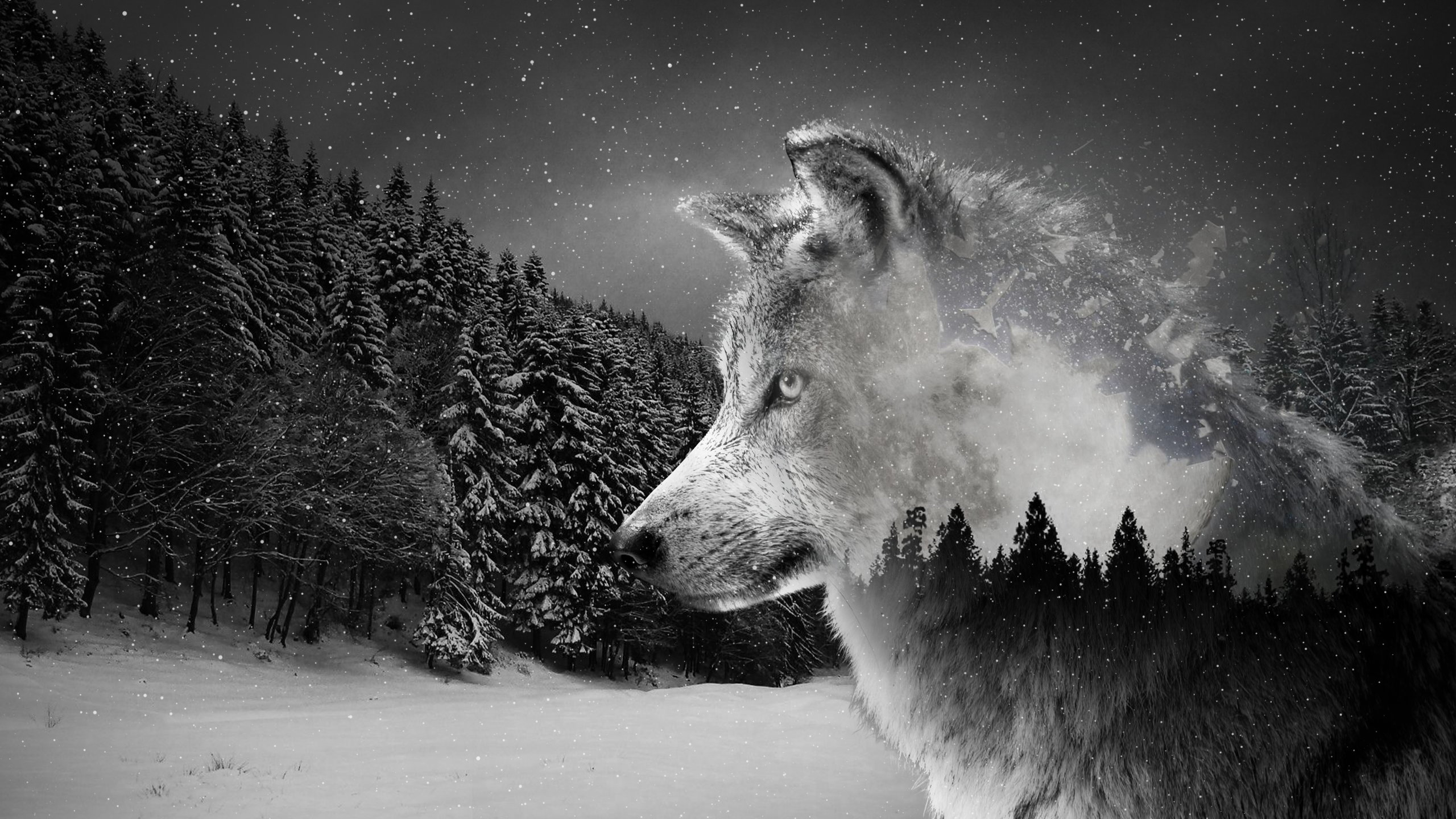 Silver Wolf Wallpaper 2560x1440 In 2020 Wolf Wallpaper Wolf Baby Wolves