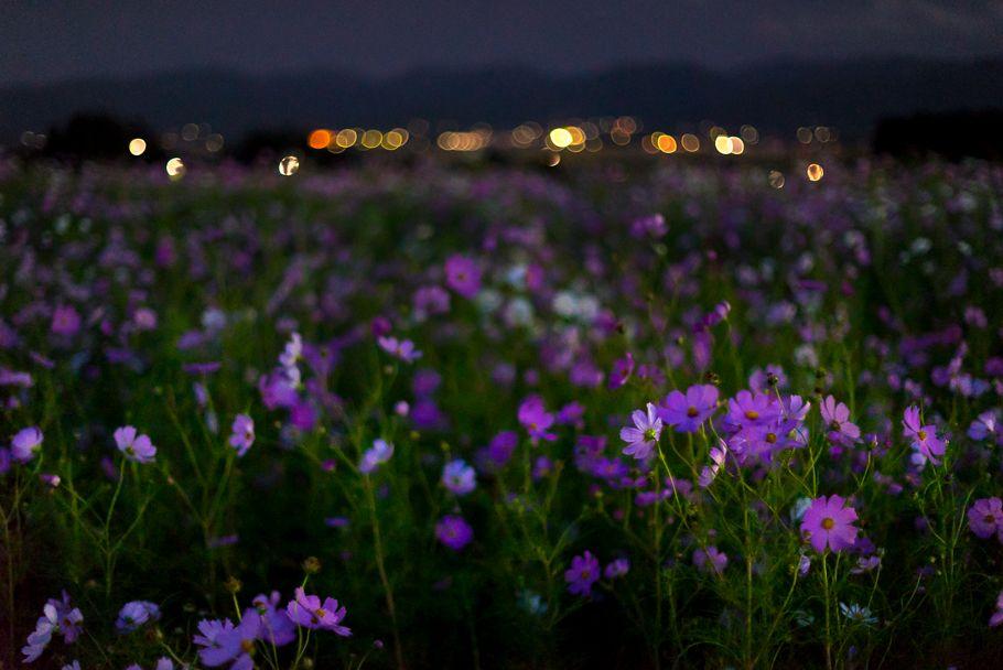 Dsc04892 Jpg 風景写真 風景 四季