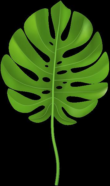 d396a4102e Tropical Palm Leaf Transparent PNG Clip Art Image Jungle Clipart