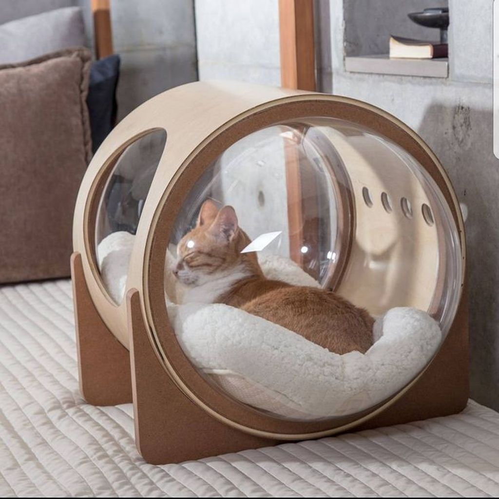 35+ Adorable Cat House Pets Design Ideas - BrowsyouRoom   - Interior and Furniture #Adorable #BrowsyouRoom #Cat #Design #Furniture #house #Ideas #Interior #Pets #CatPlayground #Cat #Playground
