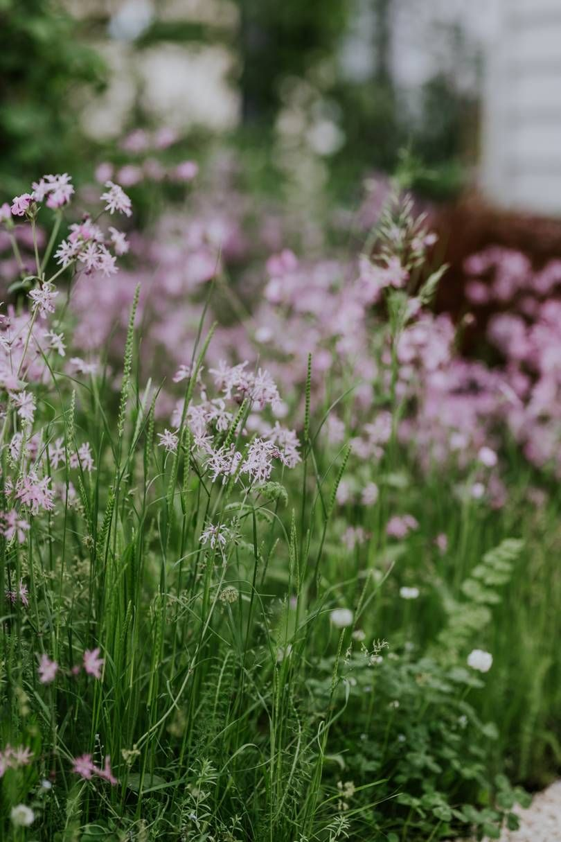 highlights from the RHS Chelsea Flower Show 2018 Chelsea