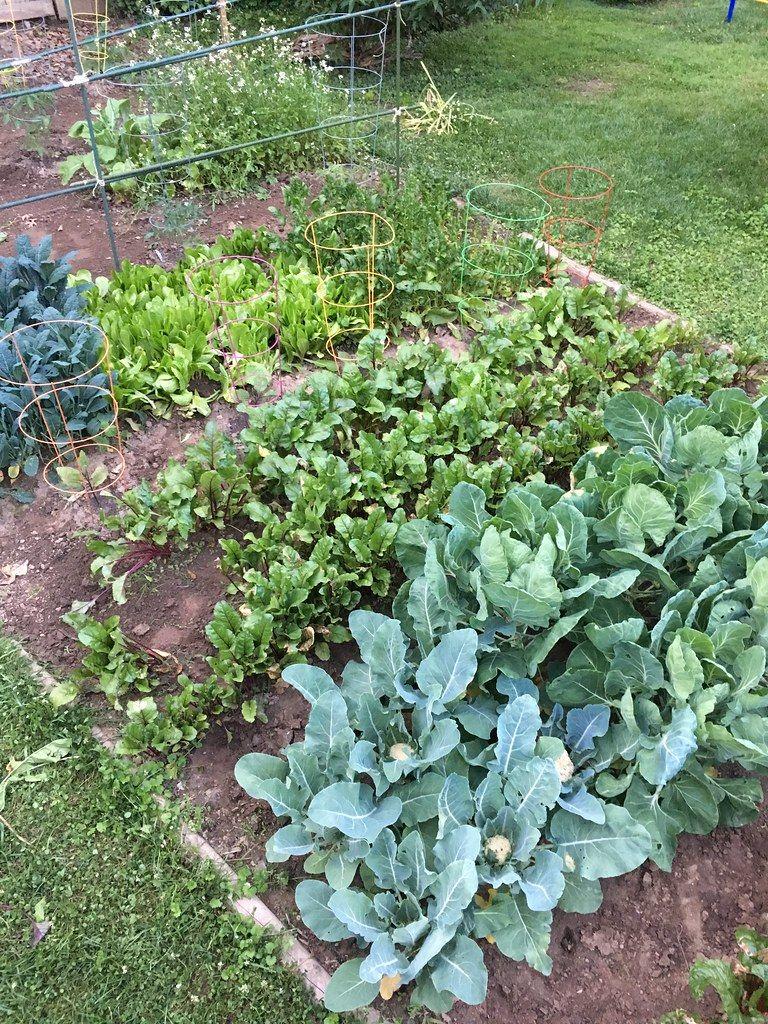 Check our Vegetable Garden vegetablegardening101