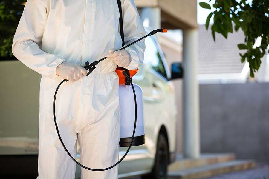 Hire A Professional Milwaukee Pest Control Agency Like Affordable Bed Bug Exterminators To Get Rid Of