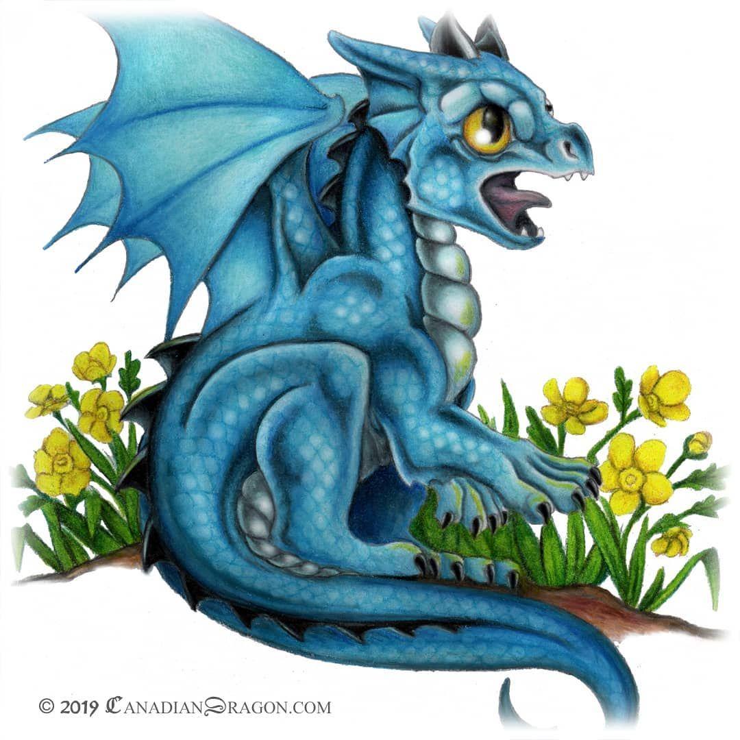 Dragon Drawing Dragon Art Baby Dragon Pencil Drawing Dragon