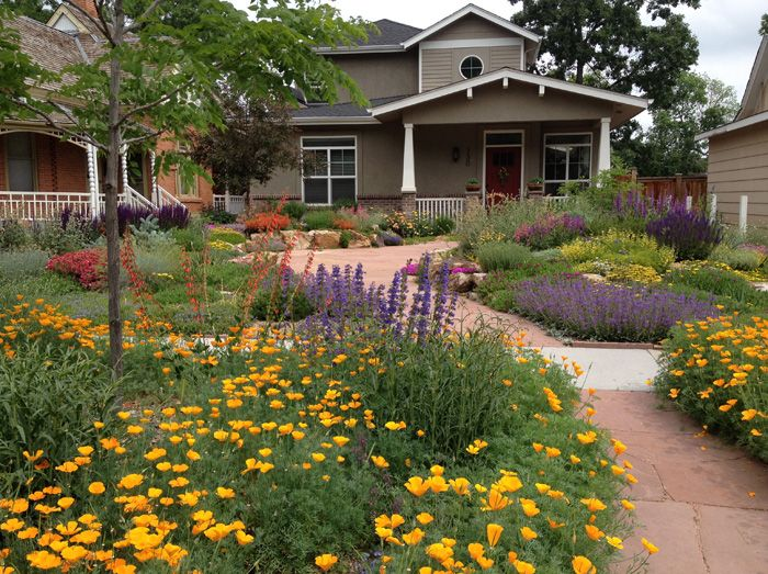 This gorgeous drought tolerant front lawn was created from for Drought tolerant yard
