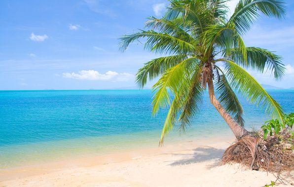 Фото обои песок, море, пляж, солнце, пальмы, берег, summer ...
