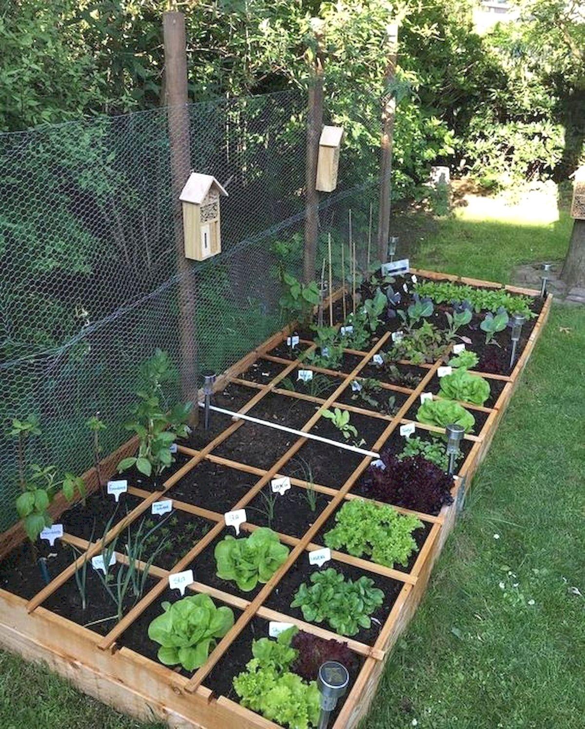 5 Vertical Vegetable Garden Ideas For Beginners: Advantages Of Planting Vegetable Gardens