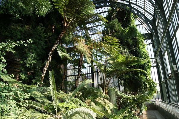 Serre Tropicale Jardin des Plantes PARIS | Jardin interieur ...