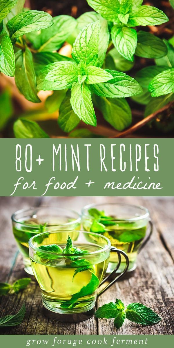 These 80+ mint recipes for food and medicine are sure to please! Use up all of that mint in your garden with these recipes for food, drinks, desserts, bath & body, and remedies. #mint #recipes
