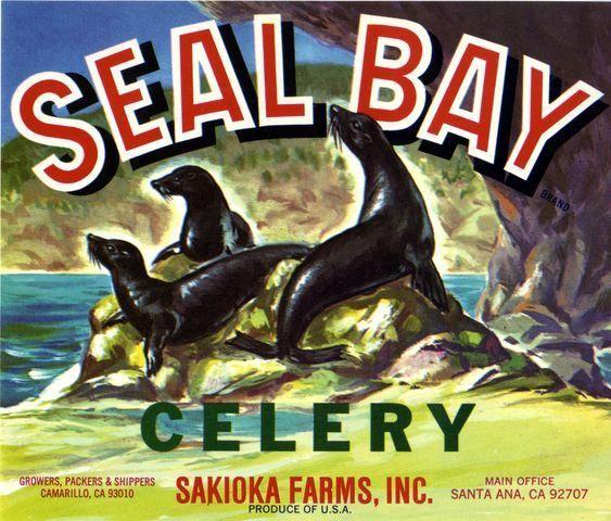 Seal Bay Celery, Santa Ana California Vintage Vegetable