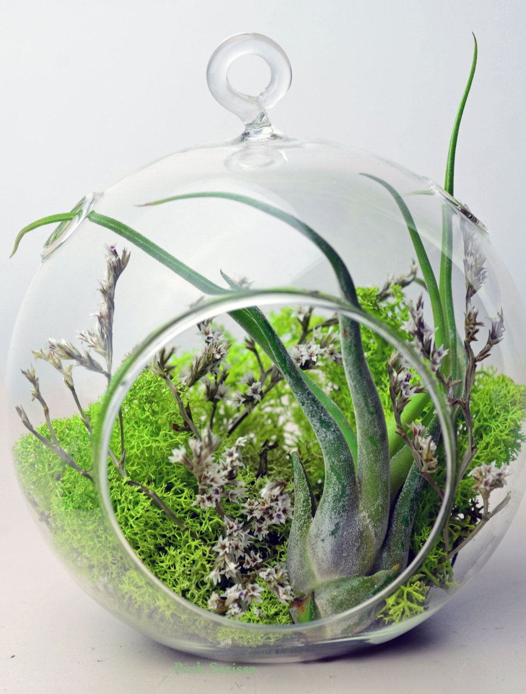 Air plant terrarium hanging glass orb green by pinkserissa