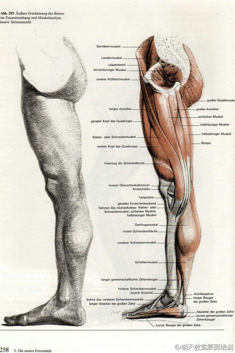 Pin by Hukaruu Aru on Anatomy & people poses | Pinterest | Anatomy