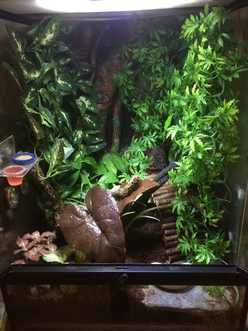 Planted crested gecko set up vivarium ideas pinterest geckos