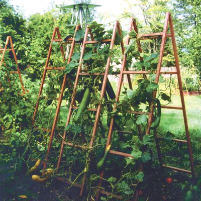 Vegetable Trellises