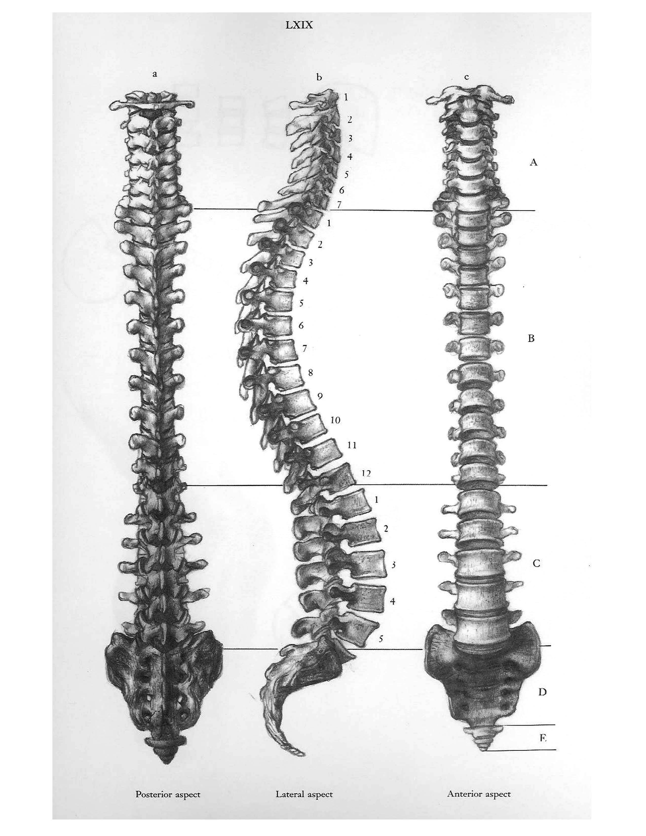 Pin Szerz Je Magor Vagyok Kozzeteve Itt Drawing Tutorials The Human Skeleton System