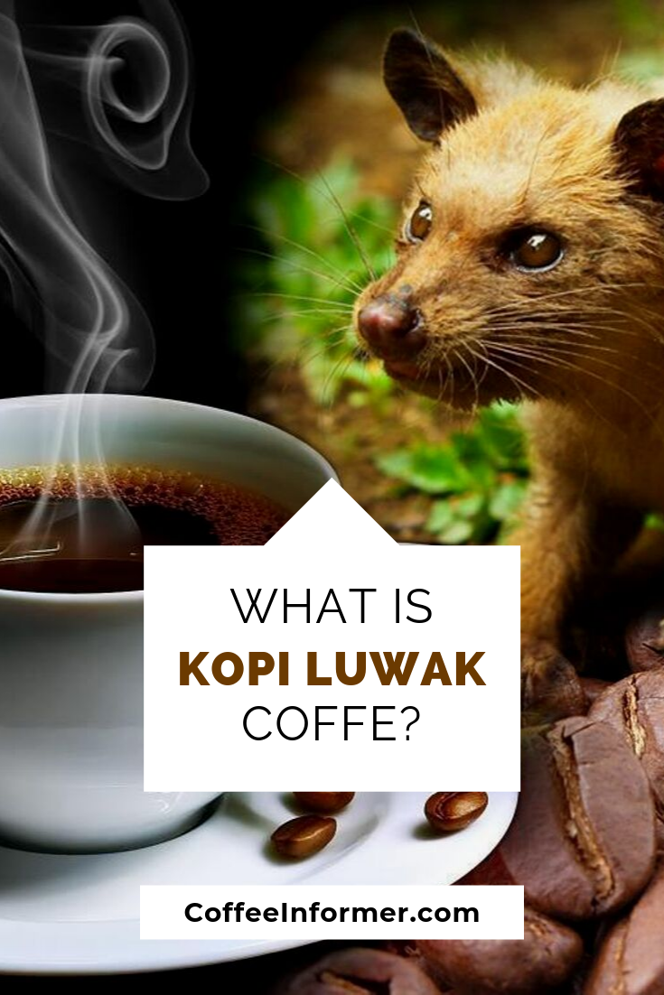So what is Kopi Luwak? Learn about this specialty coffee