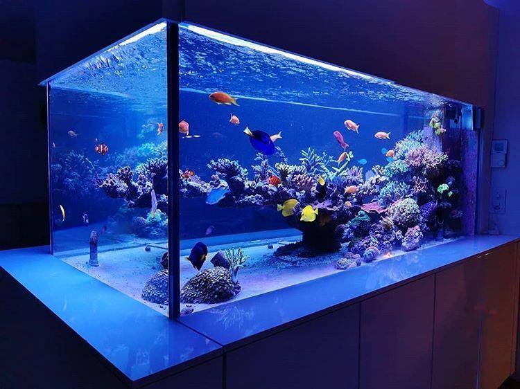 Epingle Par Roypro Sur Akvadizajn En 2020 Aquarium Maison Aquarium Eau De Mer Aquarium Poisson