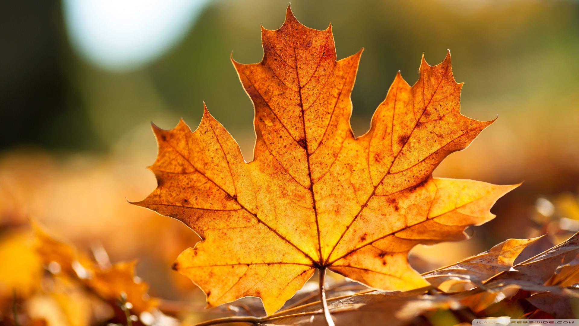 Autumn Animals Autumn Leaf Wallpapers10 Hd Wallpapers Fan