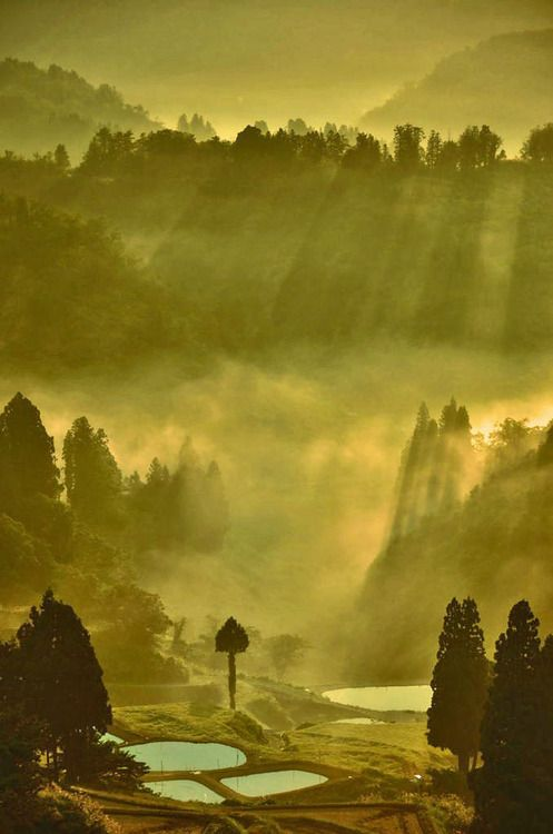 Optical Axis Of The Tanada Rice Fields Yamakoshi Niigata Japan Photography By Yunosuke Ishikawa Beautiful Places In Japan Japan Culture Scenery