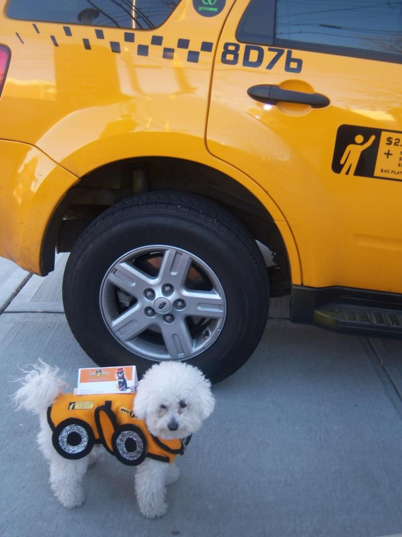 insta cute taxi dog costume funny taxi pinterest dog