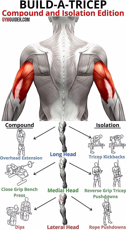 Trizeps-Training: 3 Superset-Workout-Routine für Killertrizeps - GymGuider.com   - Fitness - #Fitnes...