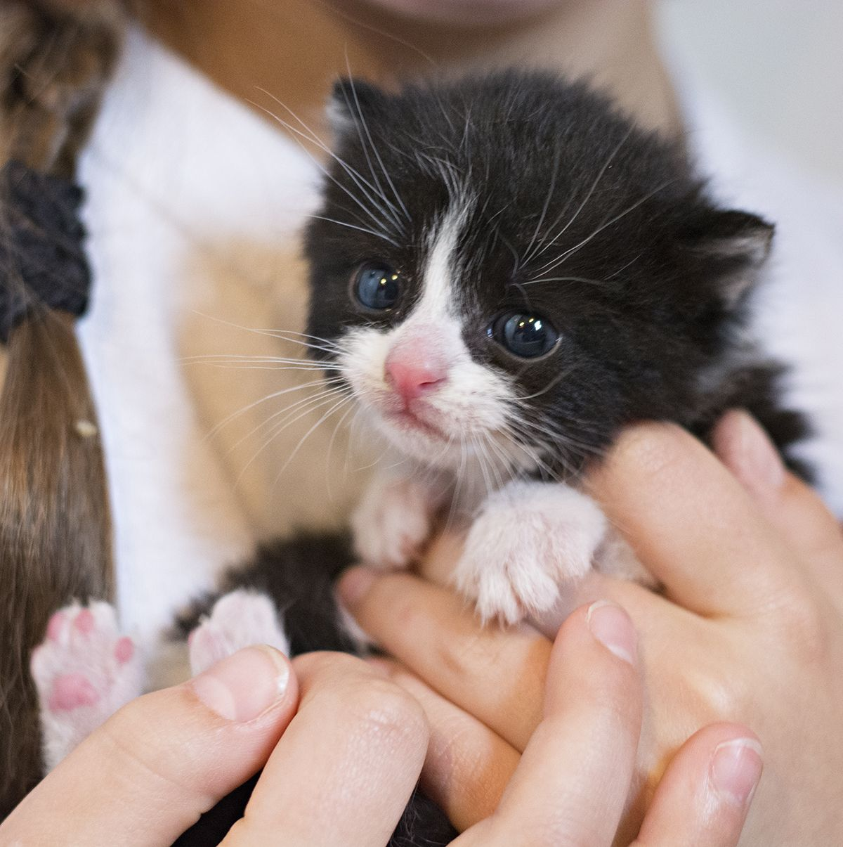 Can My Cat Eat The Same Food That I Eat Good Question Though The Answers Vary There Is A Lot To Know About Cat Food And C In 2020 Foster Kittens