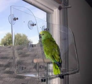 Window Perch For Large Parrots Pamper Your Parrot