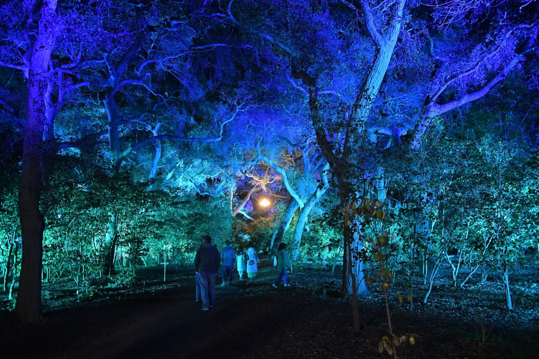 e5d27376adf72536eee72a575b6a323c - Enchanted Forest Of Lights At Descanso Gardens