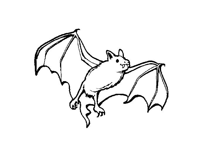 Bat Coloring Pages Printable S Printables