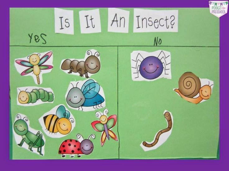 Image Result For Insects Lesson Plans Insects Theme Preschool Insects Preschool Preschool Bug Theme Bug insect lesson plans preschool