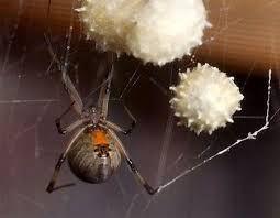 e5d2b9b4d75c909bab52923a581a36e3 - How To Get Rid Of Spiders In Side Mirror