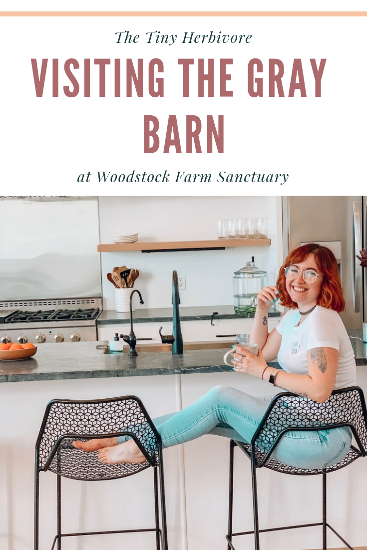Visiting The Gray Barn in Woodstock Farm Sanctuary (With