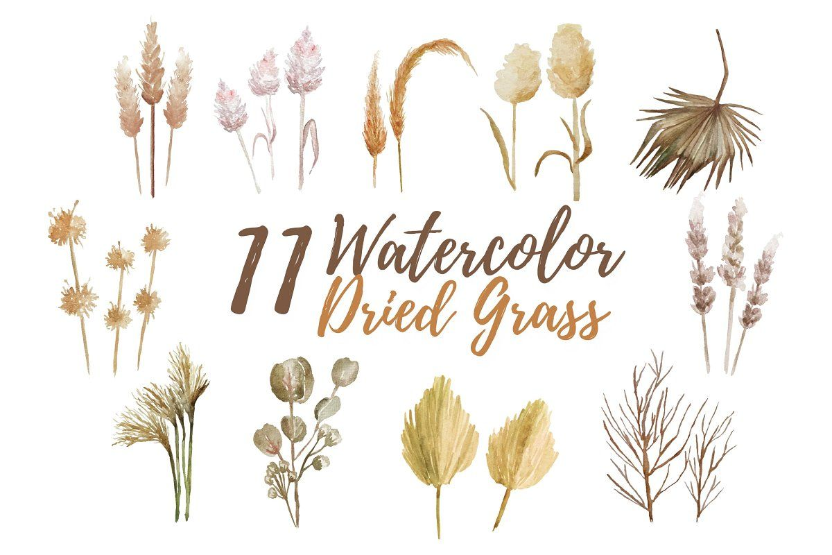 11 Watercolor Dried Grass Watercolor Illustration Graphic