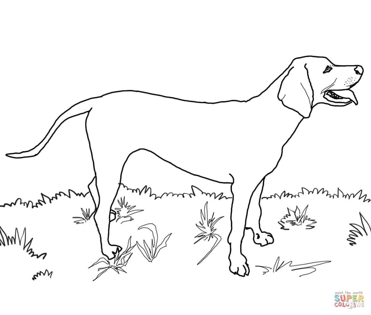 Redbone Coonhound   Super Coloring   Dog coloring page ...