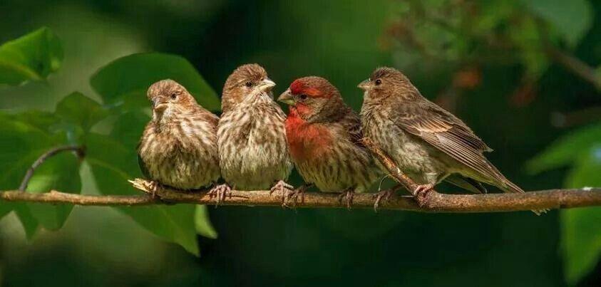 4 πουλακια