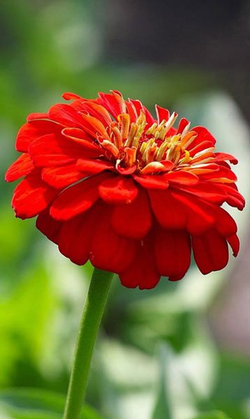 Beautiful Red Flower Beautiful Flowers Wallpapers Download Flower