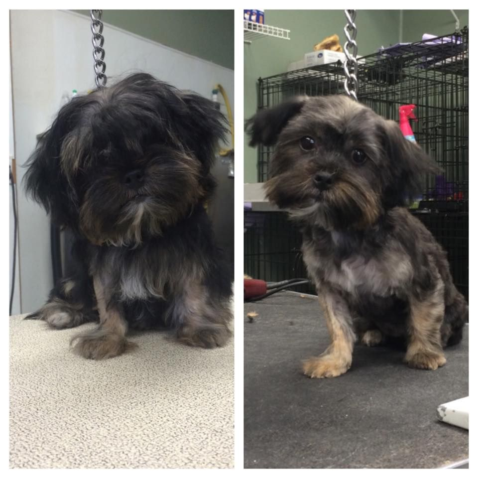 Before and after of 5 month old Sadie 5 month olds, 5