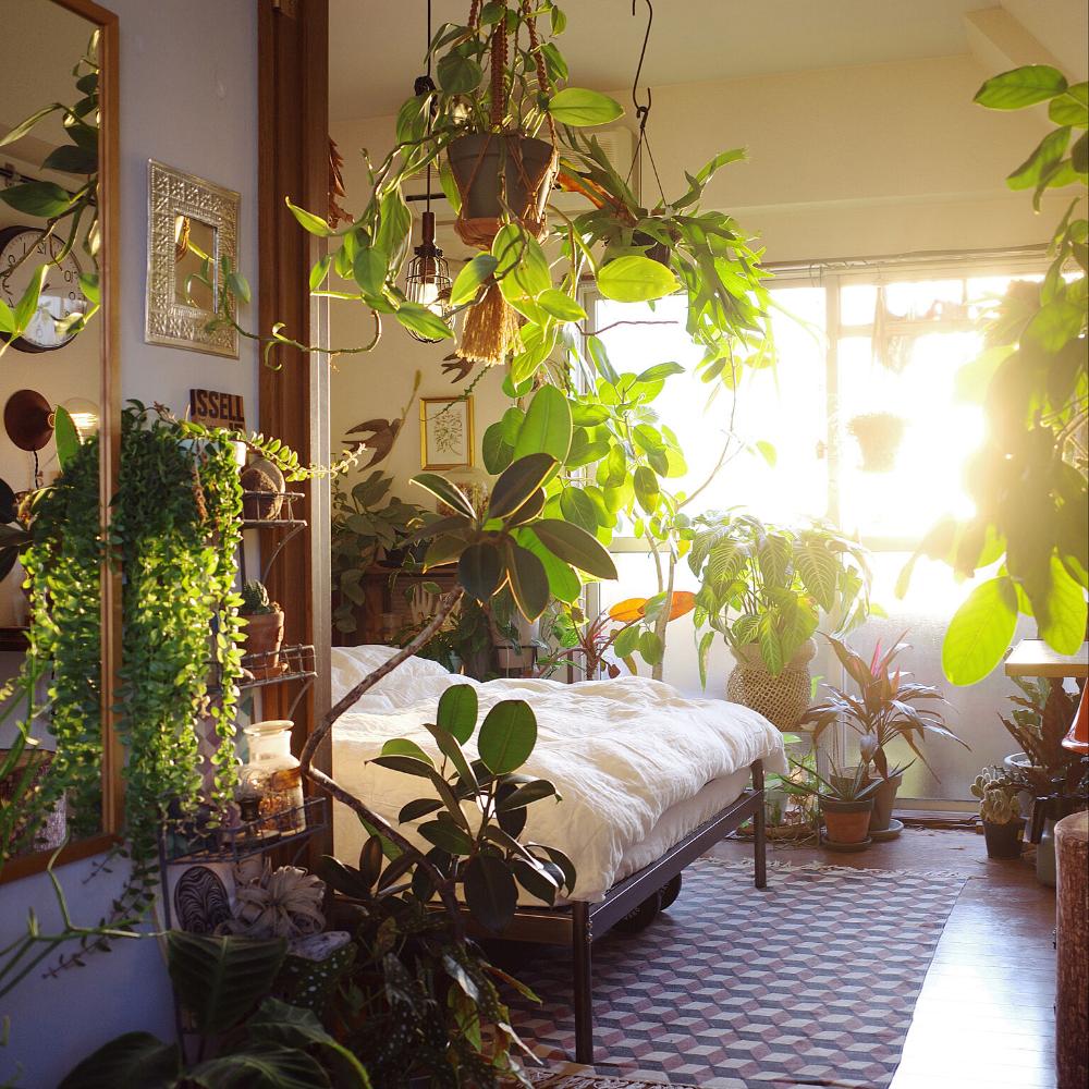 一人暮らし グリーンインテリア 観葉植物 レトロ アーバンジャングル などのインテリア実例 2020 01 13 18 24 08 Roomclip ルームクリップ グリーン インテリア インテリア 寝室の植物