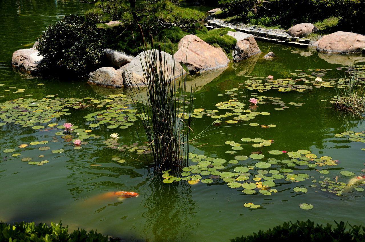 Design Japanese Pond japanese koi pond with lilies by andyserrano on deviantart deviantart