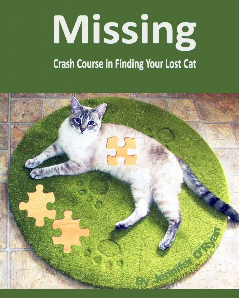 Crash Course In Finding Your Lost Cat Lost Cat Cats Cat Care