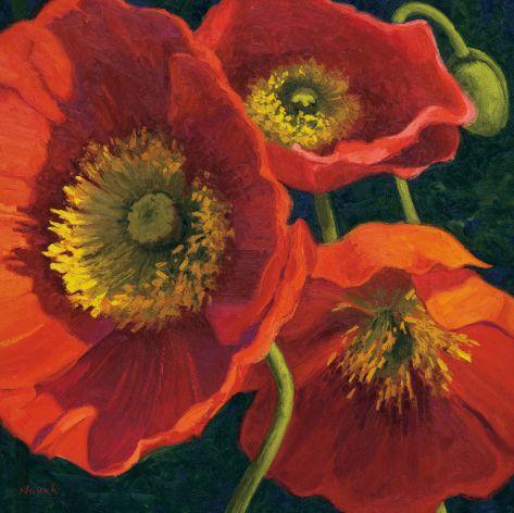 Red Poppy Trio II