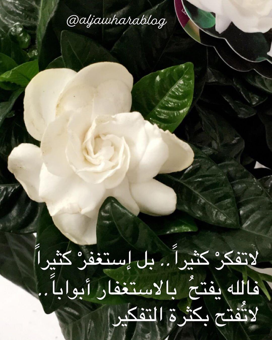 Aljawharalab On Instagram صباحكم أبيض كبياض قلوبكم النقية أبدؤا يومكم بإبتسامة من القلب وكونوا على ثقة بالله دعاء صباح الخير يوم Flowers Plants Rose