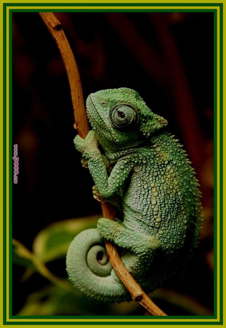 82 Reference Of Kids Ilustrations Forest In 2020 Chameleon Pet