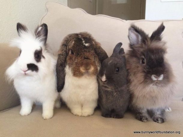 Four bunnies all in a row:)