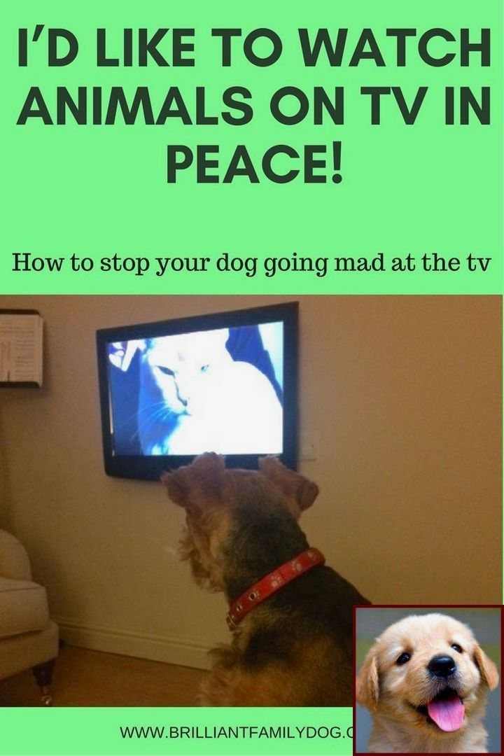House training a puppy uk and dog behavior disorders