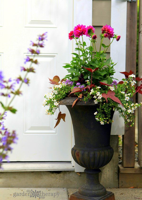Decorative Ideas for Creating a Summer Container
