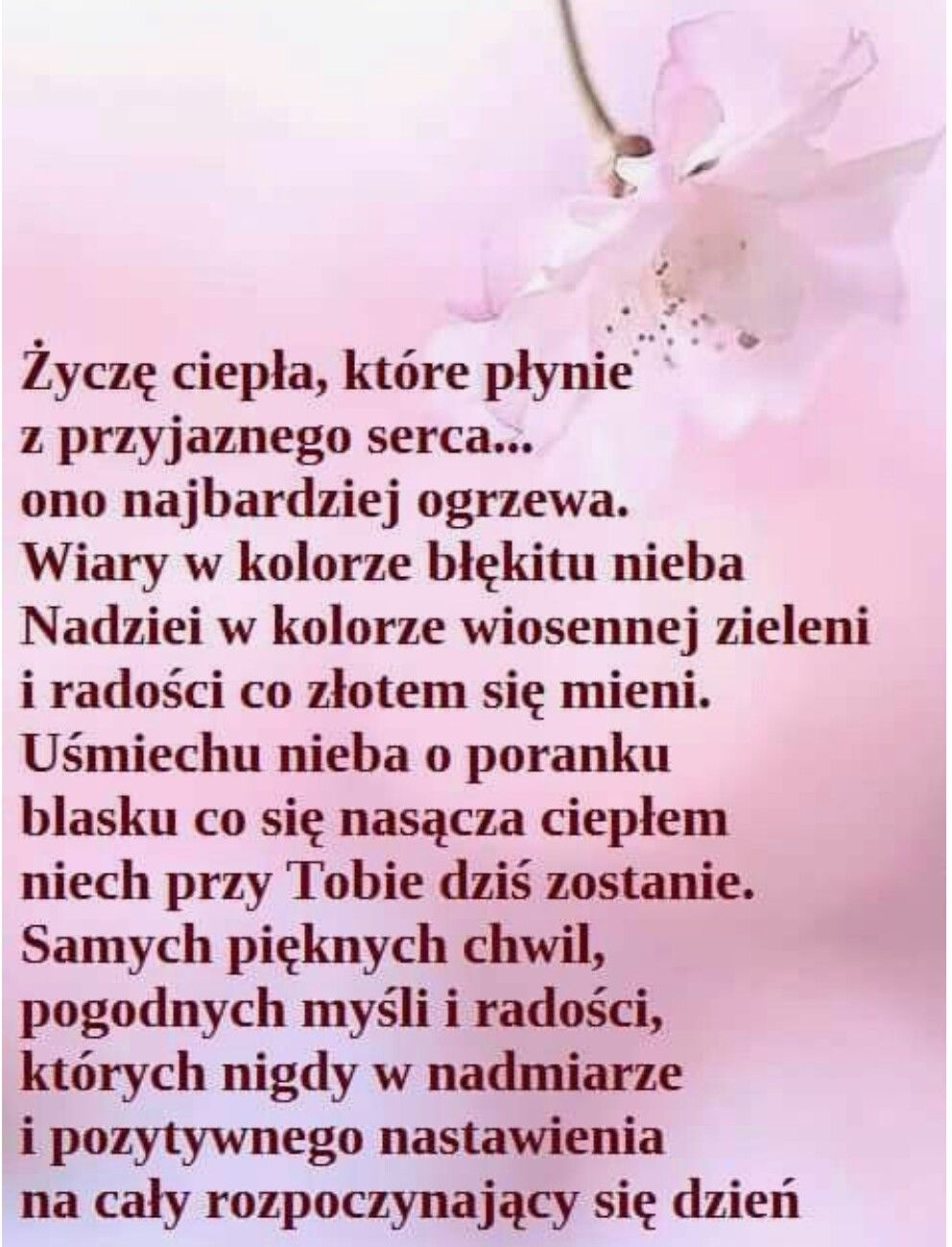 Pin By Ewa Pietrzak On Zyczenia With Images Cytaty Urodzinowe