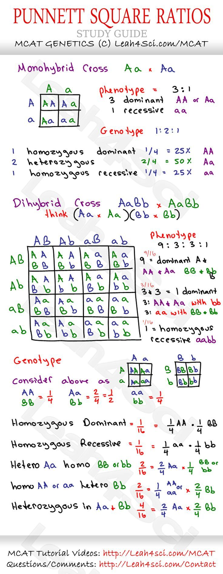 Punnet Square Ratios Mcat Genetics Cheat Sheet Study Guide Jpg 1 069 2 750 Pixels Biology Lessons Biology Classroom Teaching Biology
